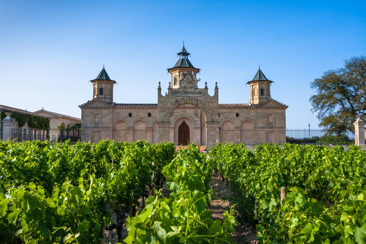 Bordeaux œuvre pour le projet 55 000 hectares  – vue sur un vignoble Bordelais