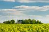 Le château de Margaux et ses vignobles à Bordeaux