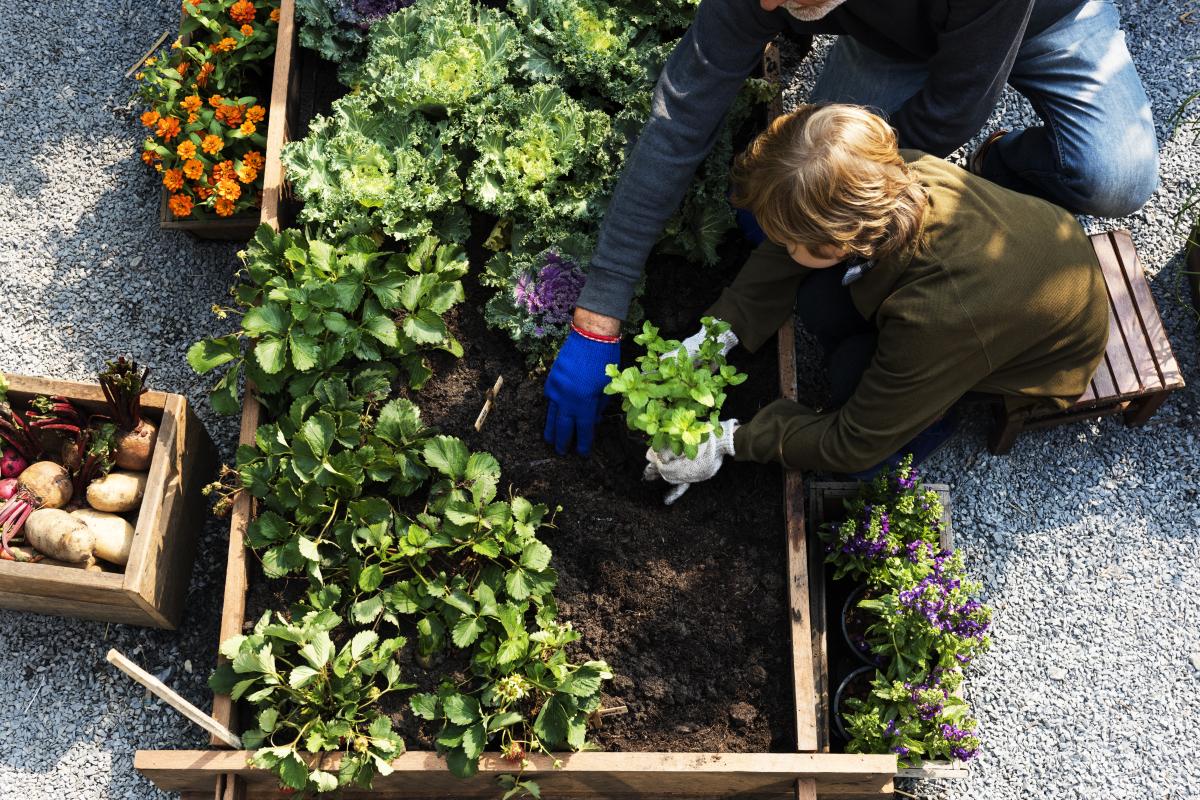 developpement durable bordeaux - une famille ramassant des légumes dans un potager