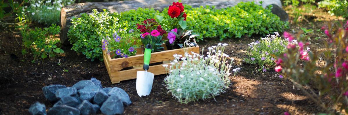 developpement durable bordeaux - un jardin fleuri